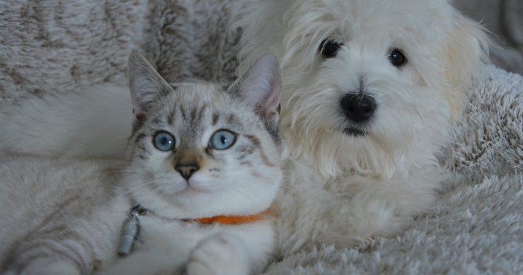 Studie: Ateisté preferují kočky, křesťané psy