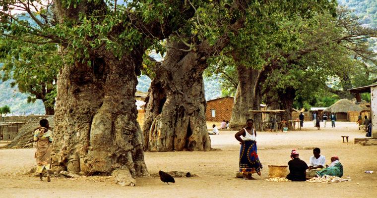 Posvátné baobaby: příbytky božstev aobjekty kultického uctívání